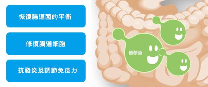 酪酸菌的功能