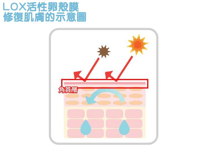 LOX酵素防止水分蒸發,修復肌膚的示意圖