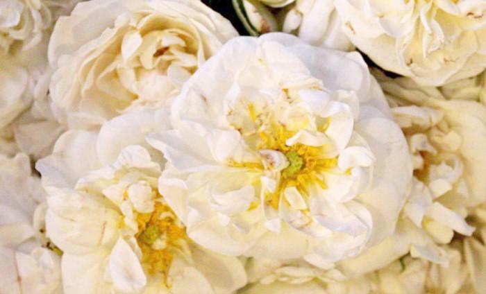 VALANROSE玫瑰錠的保加利亞玫瑰